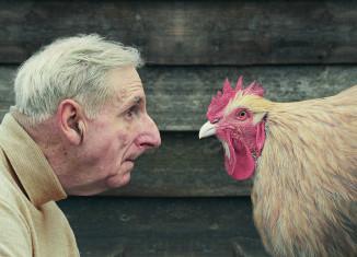 David Stewart, Hugh and chicken in profile