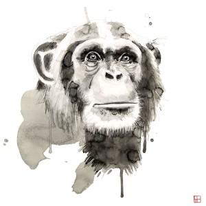 Wildlife Chimp