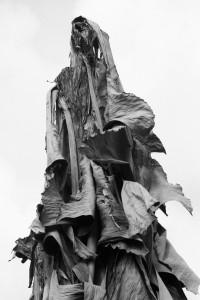 Peuple sans visage © Mujesira Elezovic