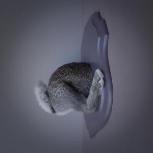 Troché de face, Lapin Série des Trochés de face débutée en 2004. Taxidermie et bois laqué ; 30X40X20 cm.