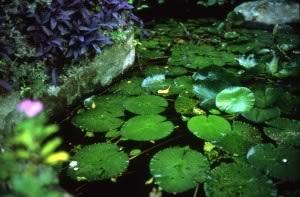 Water lilies, France © Nan Goldin