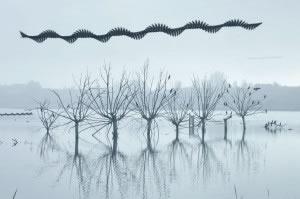 ©Xavi Bou serie Ornitografies (1)