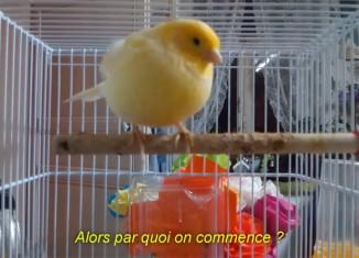 Laurent-Quillet-CONVERSATION-D'UNE-VIE-BANALE-(-titi,-question-pour-un-champion,-etc.-) vidéo