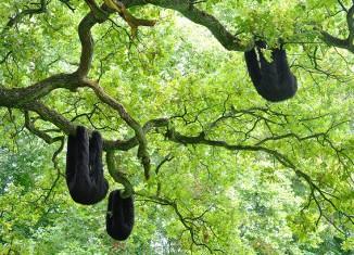 Une Colonie de paresseux en fourrure noire, 2018 © Élodie Antoine